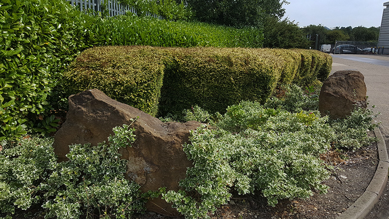 Grass cutting and hedge trimming