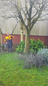 tree pruning warickshire