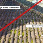 Moss roof killing