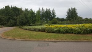 grass cutting and hedge maintenance banbury